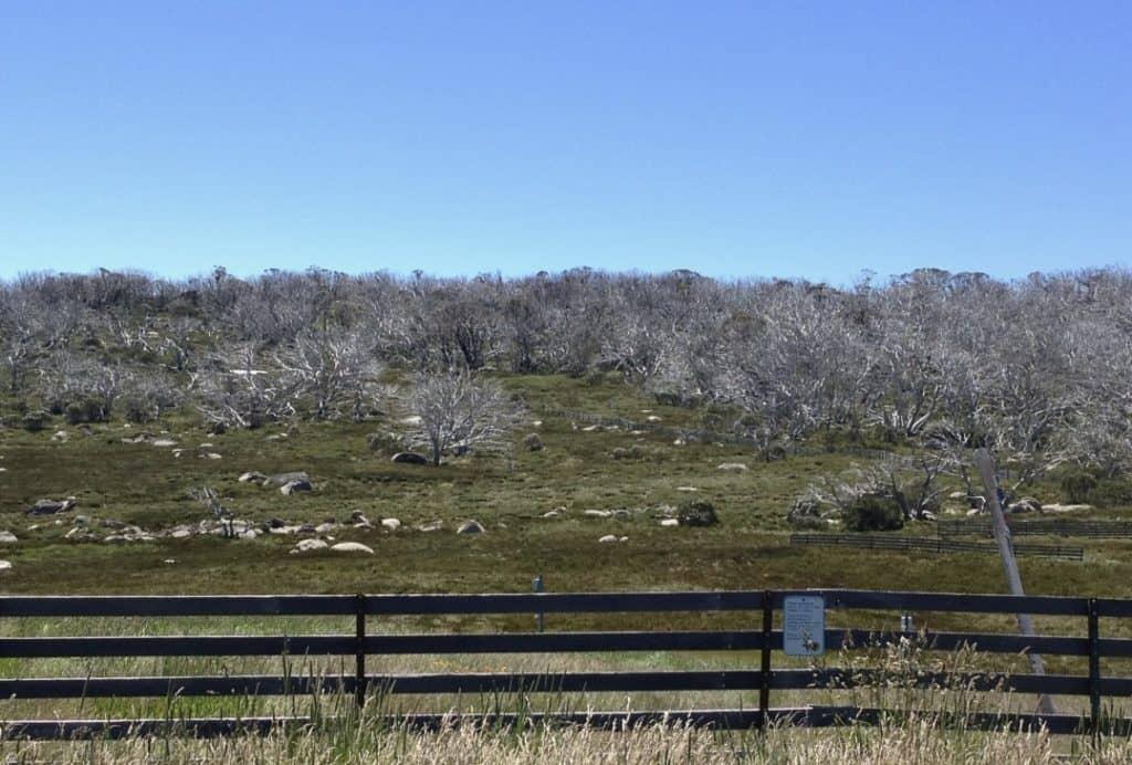 Summer View near Parrawa